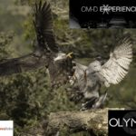 OLYMPUS EXPERIENCE